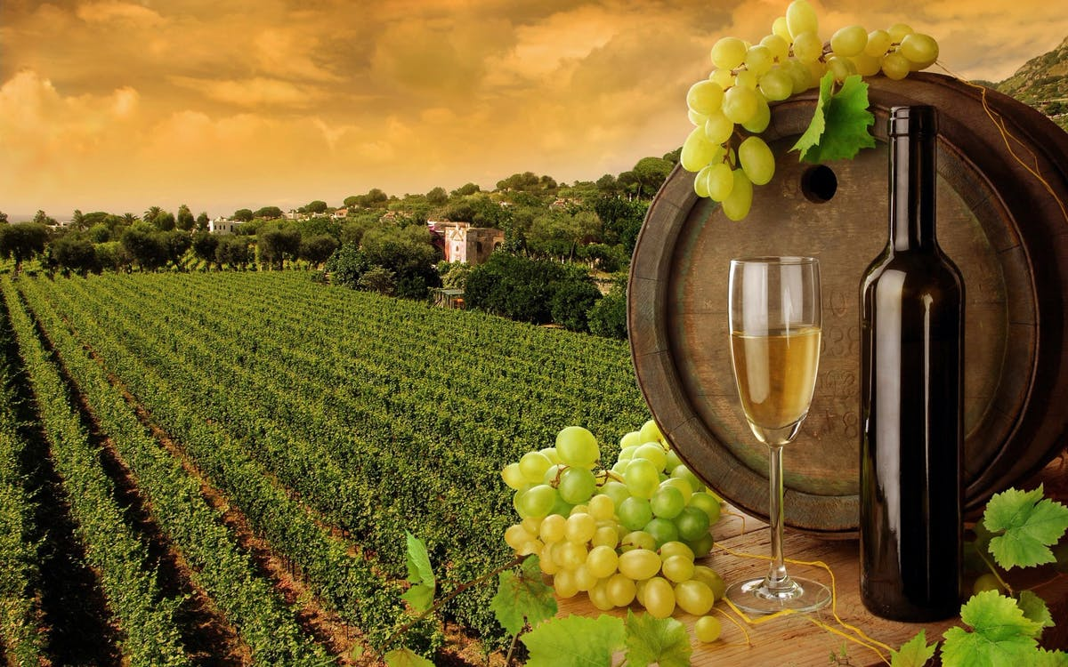 exclusive day tour to tuscany with authentic italian lunch and wine tasting-4