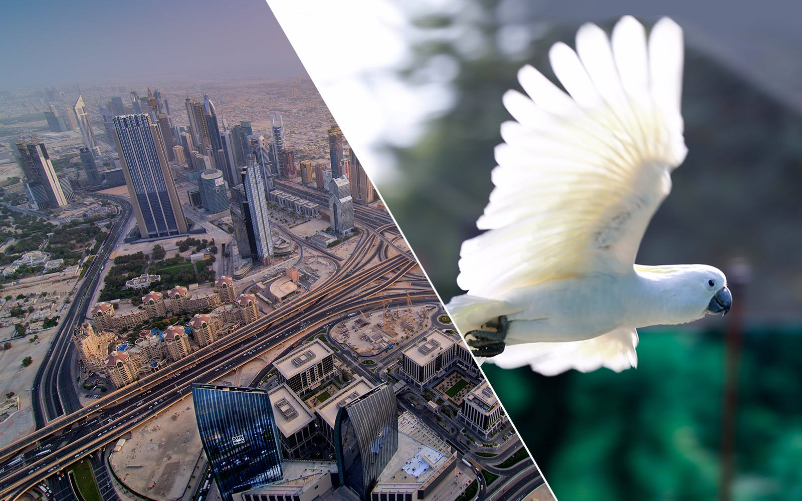 burj khalifa: at the top (level 124 & 125) with creek park exotic bird show -1