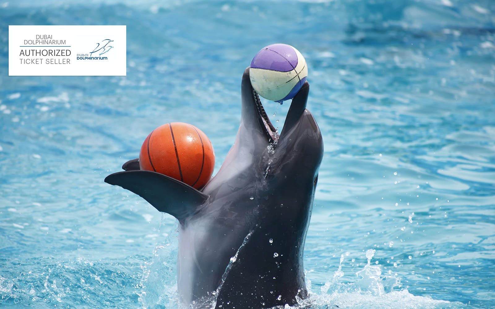 dubai dolphinarium: meet and greet dolphins-3