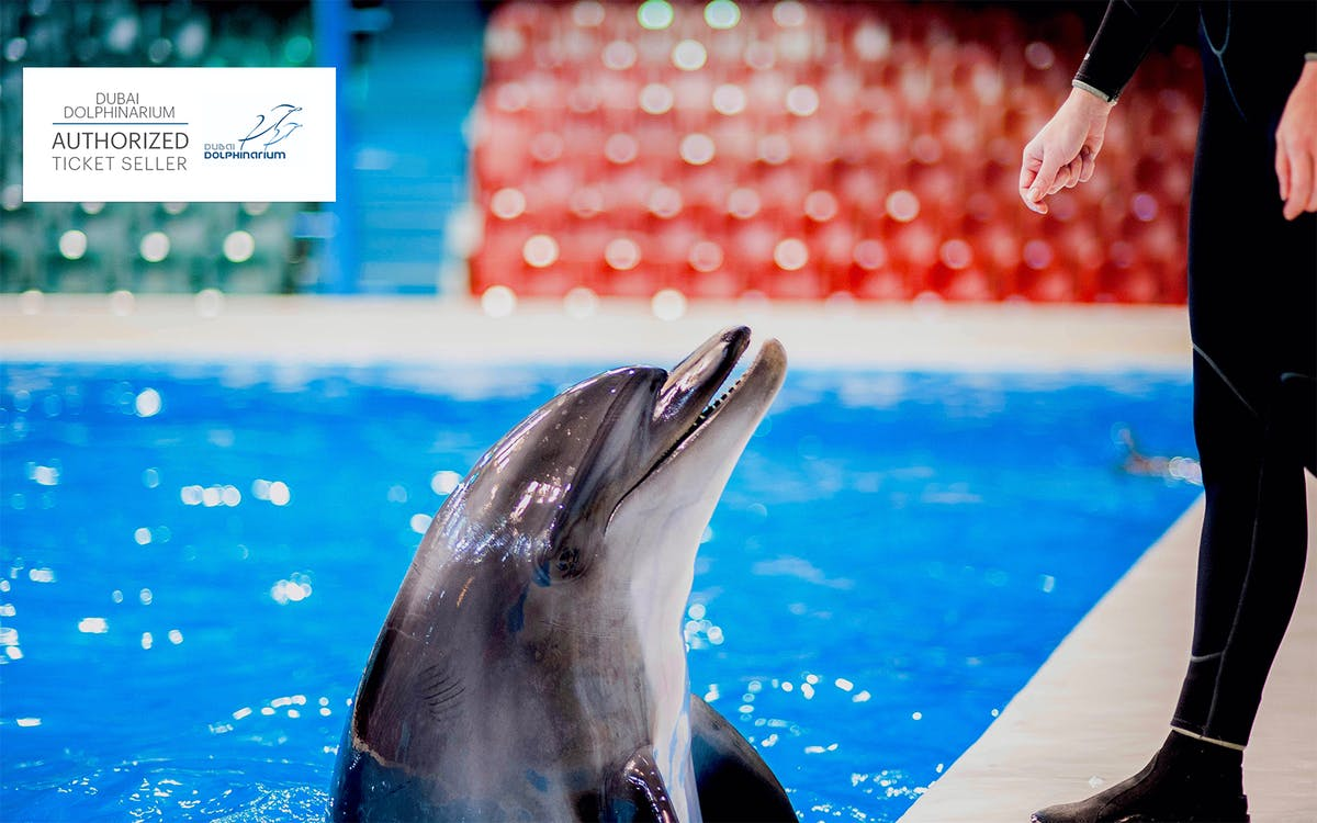dubai dolphinarium: meet and greet dolphins-1