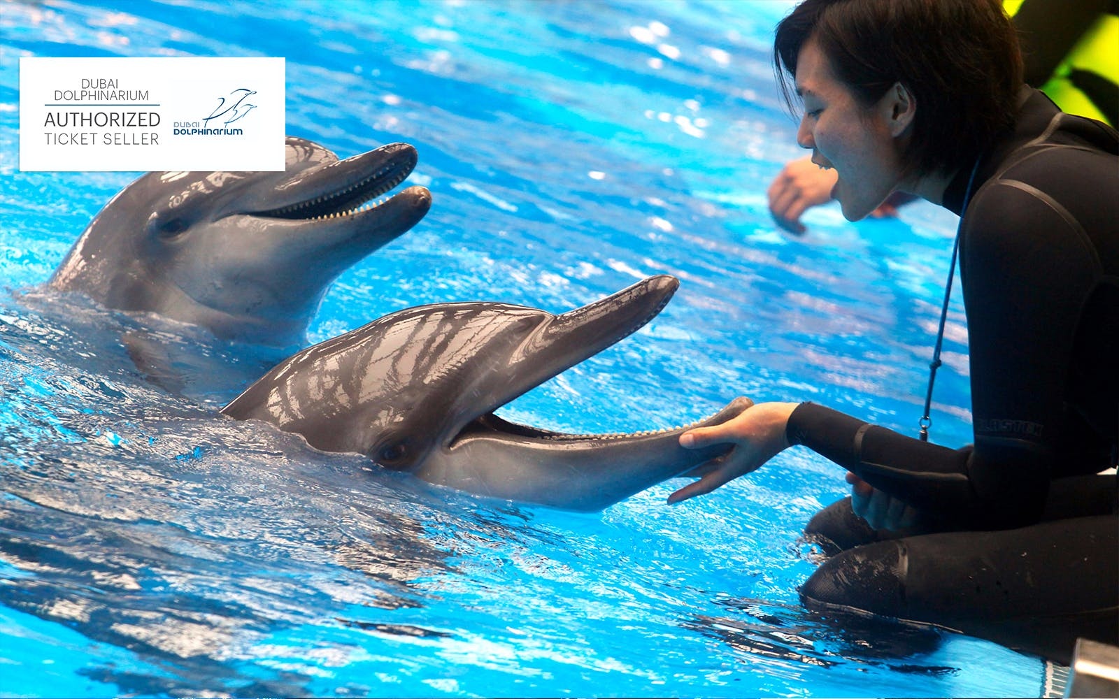 dubai dolphinarium: meet and greet dolphins-2