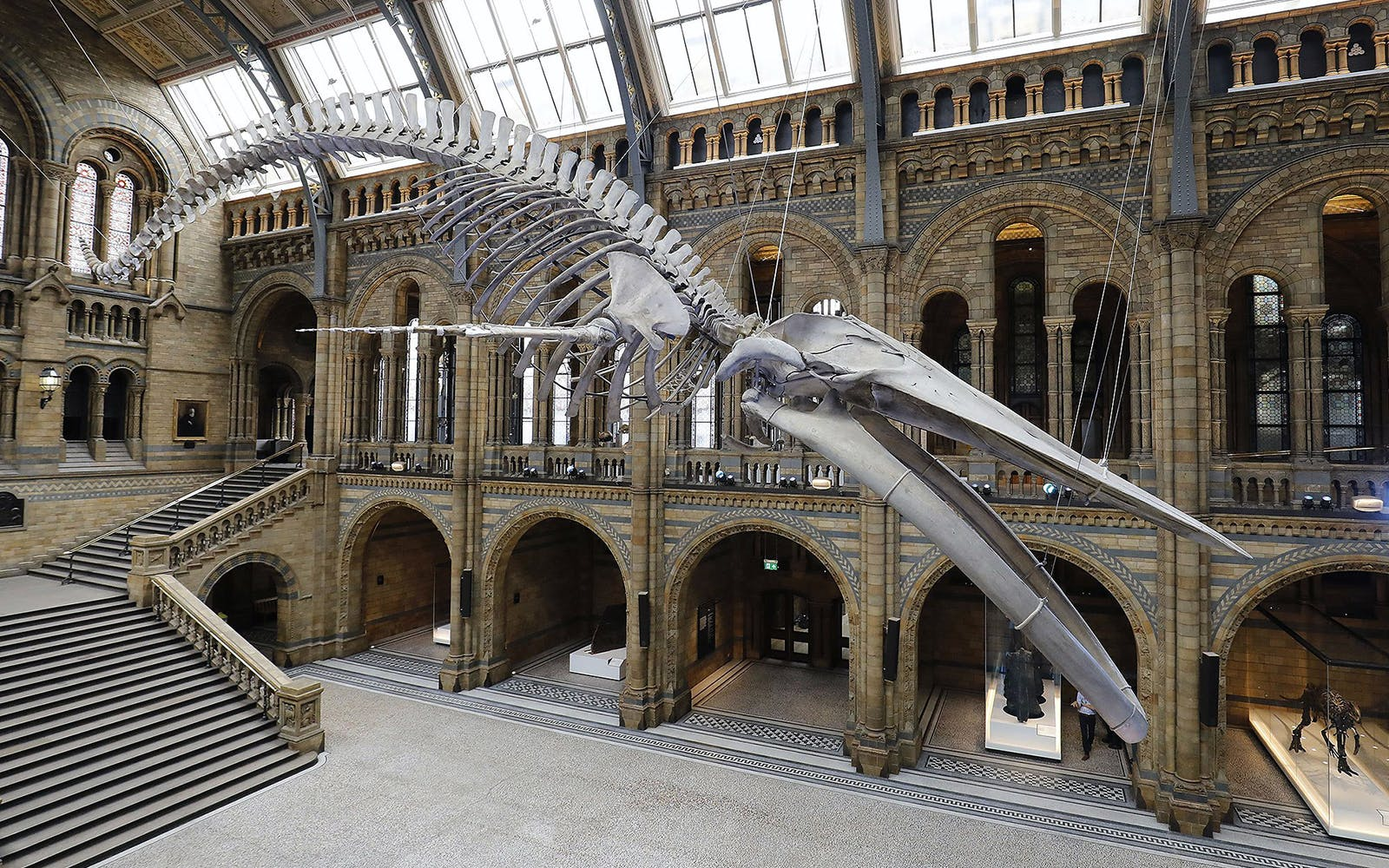 guided tour of the natural history museum-3