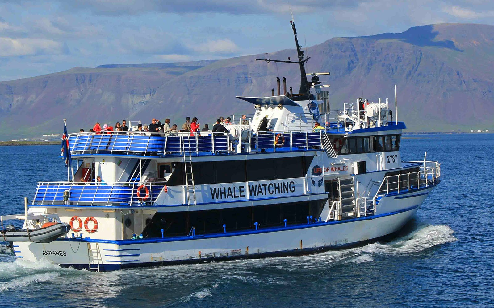 whale watching and golden circle tour-2