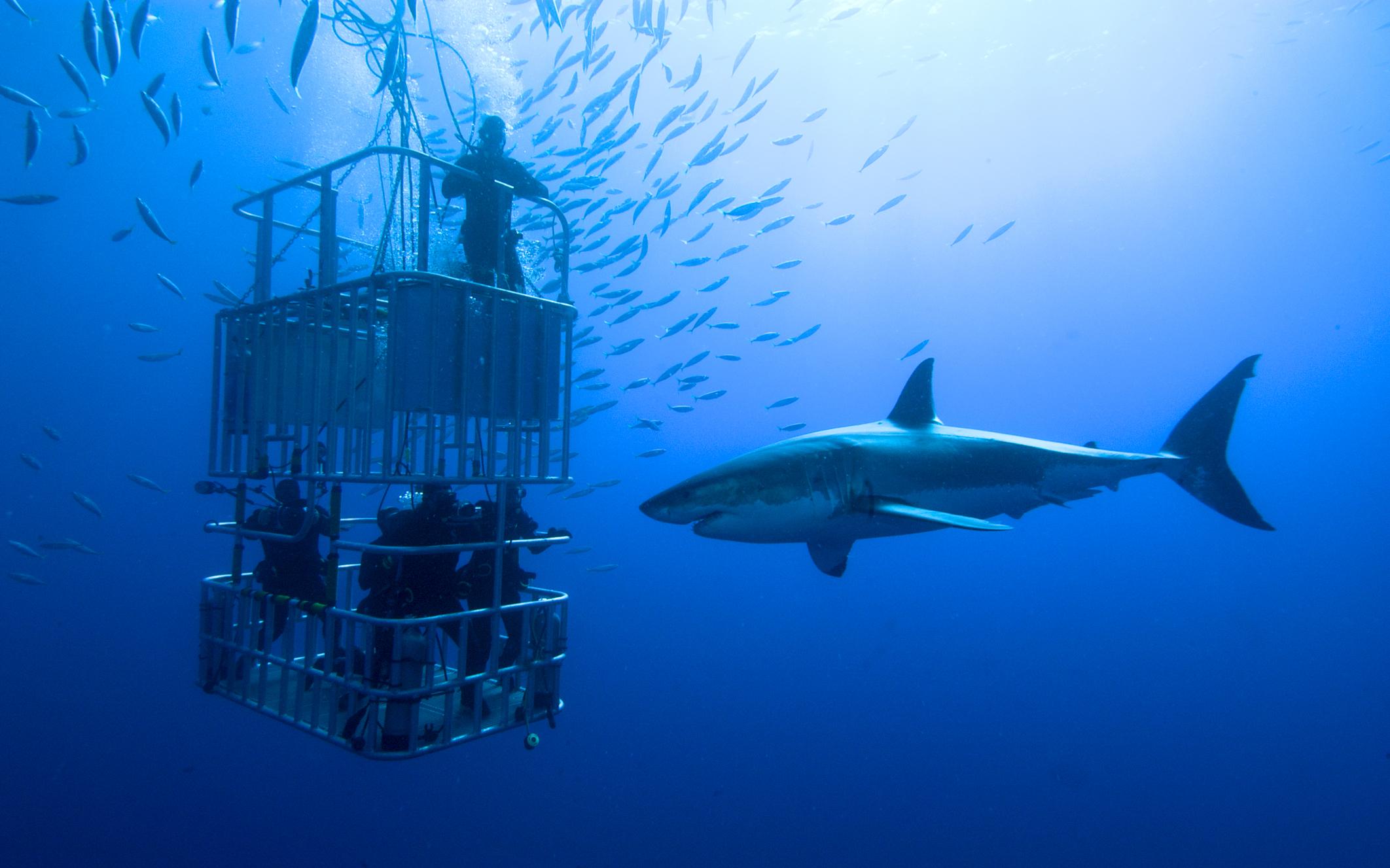 Dubai Aquarium - Cage Snorkelling