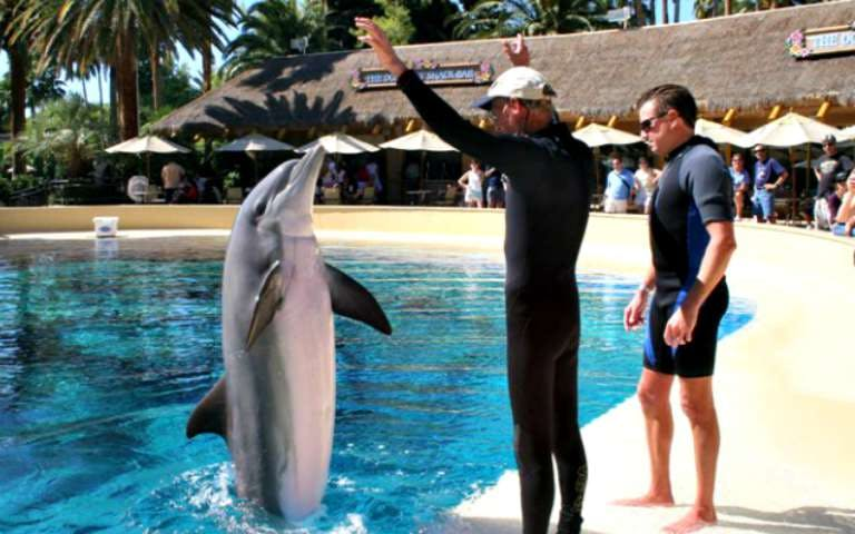 siegfried & roy's secret garden and dolphin habitat-1
