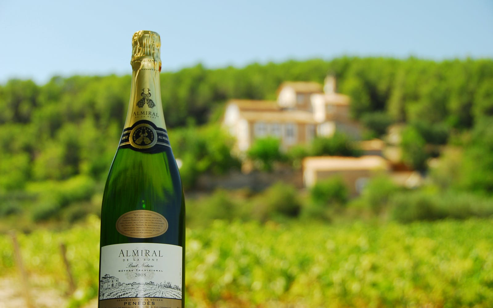 Wine and Cava Full Day Trip