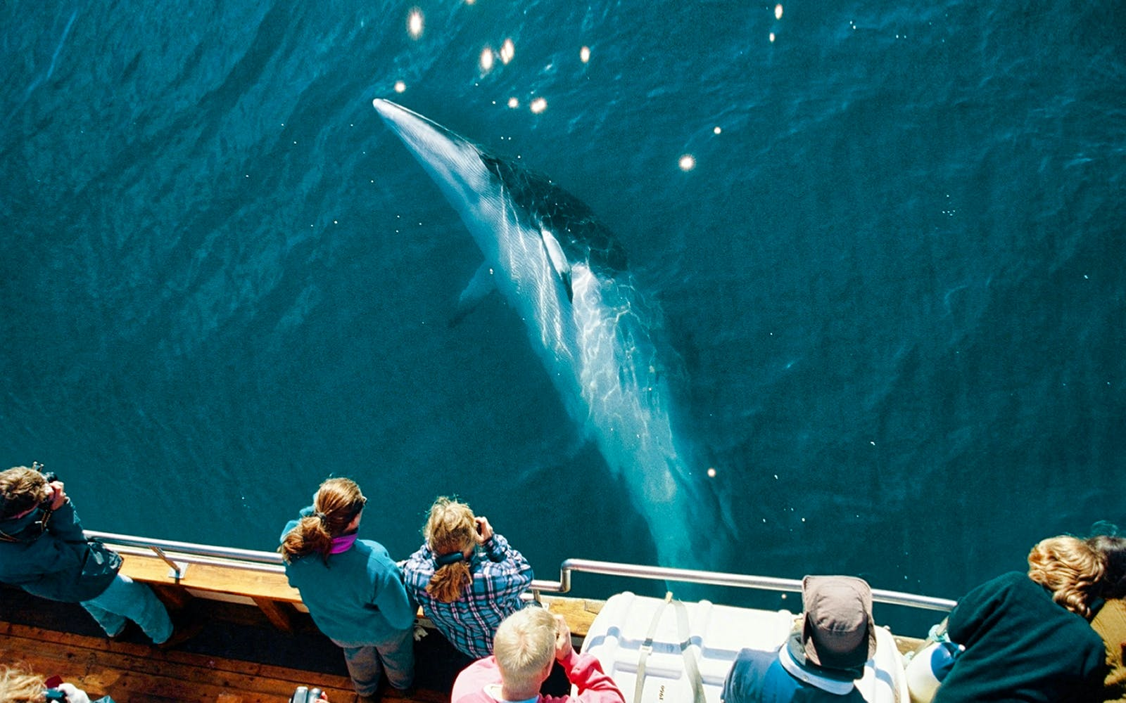 Full Day Tour of Golden Circle with Whale Watching Adventures