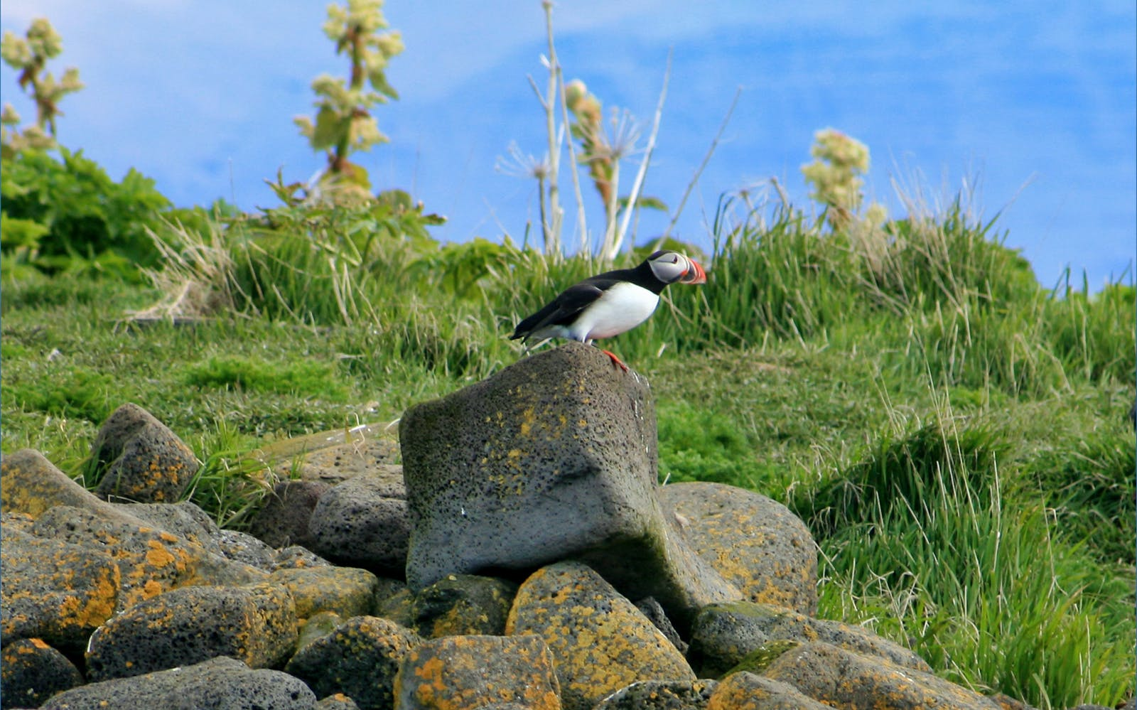 puffin watching tour off the reykjavik coast-2