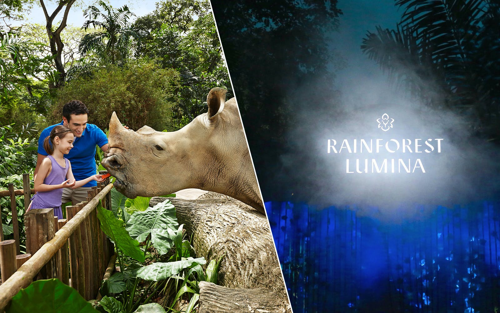 rainforest lumina + Singapore zoo