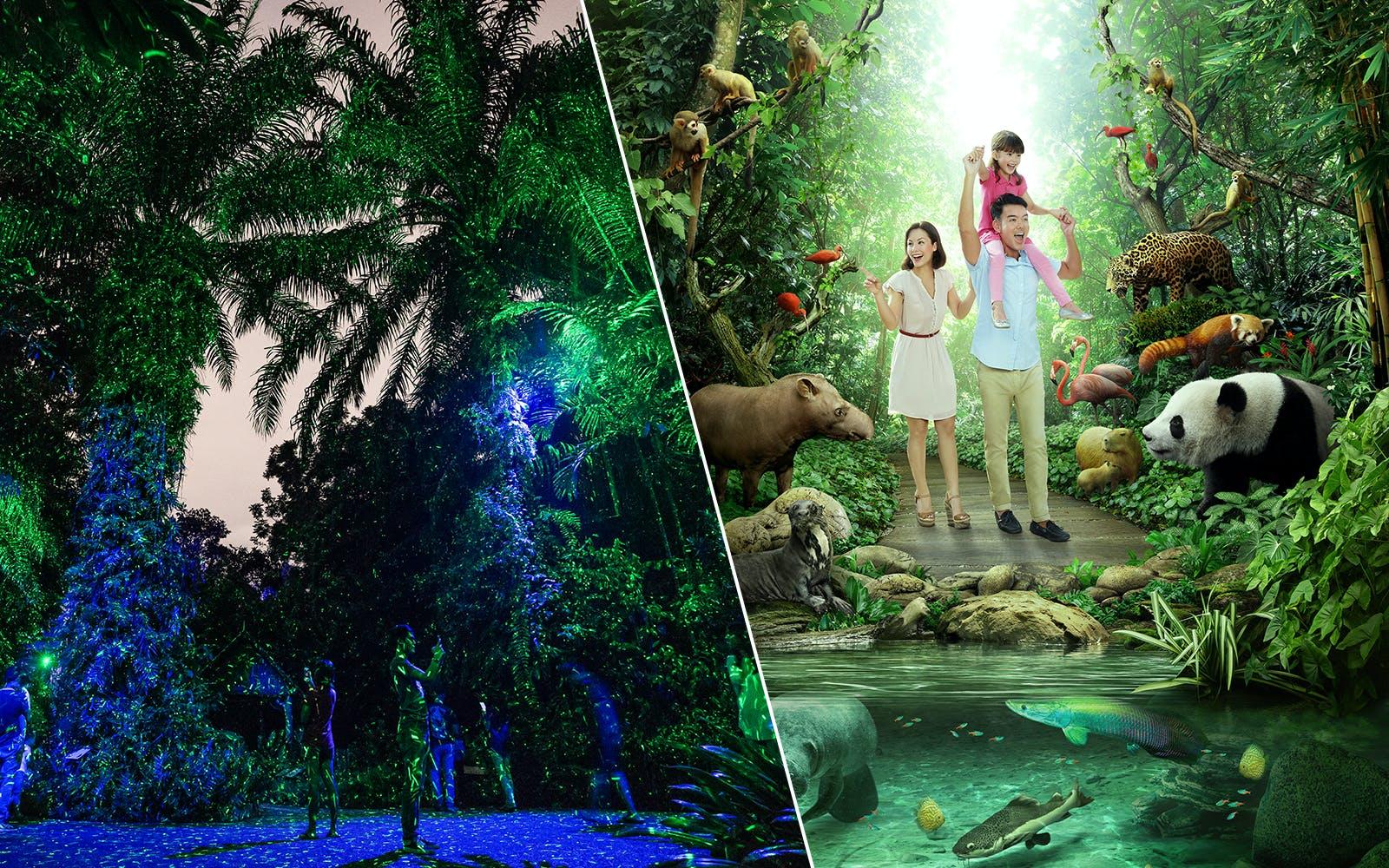 rainforest lumina + River Safari