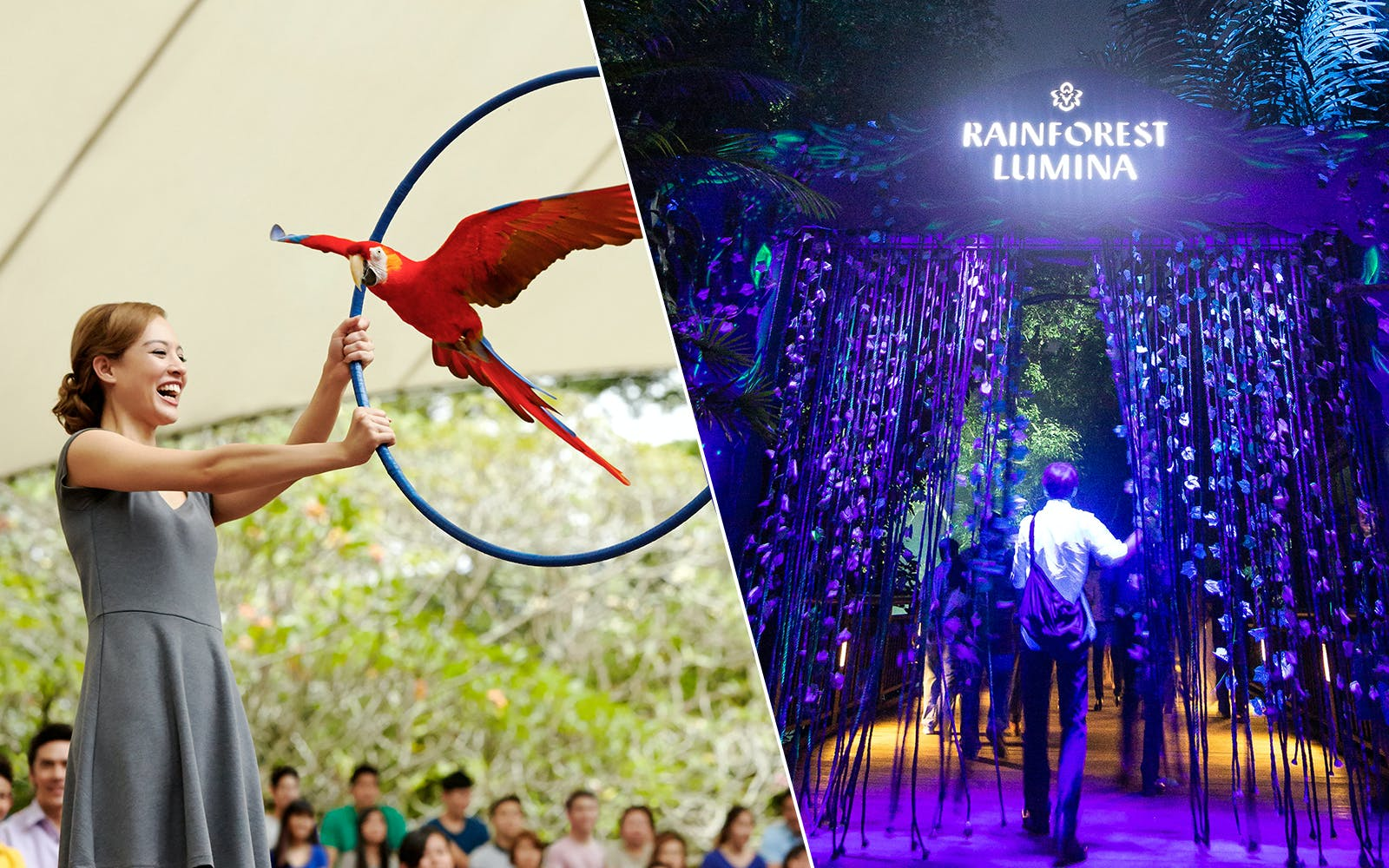 Super Saver Combo: Rainforest Lumina + Jurong Bird Park