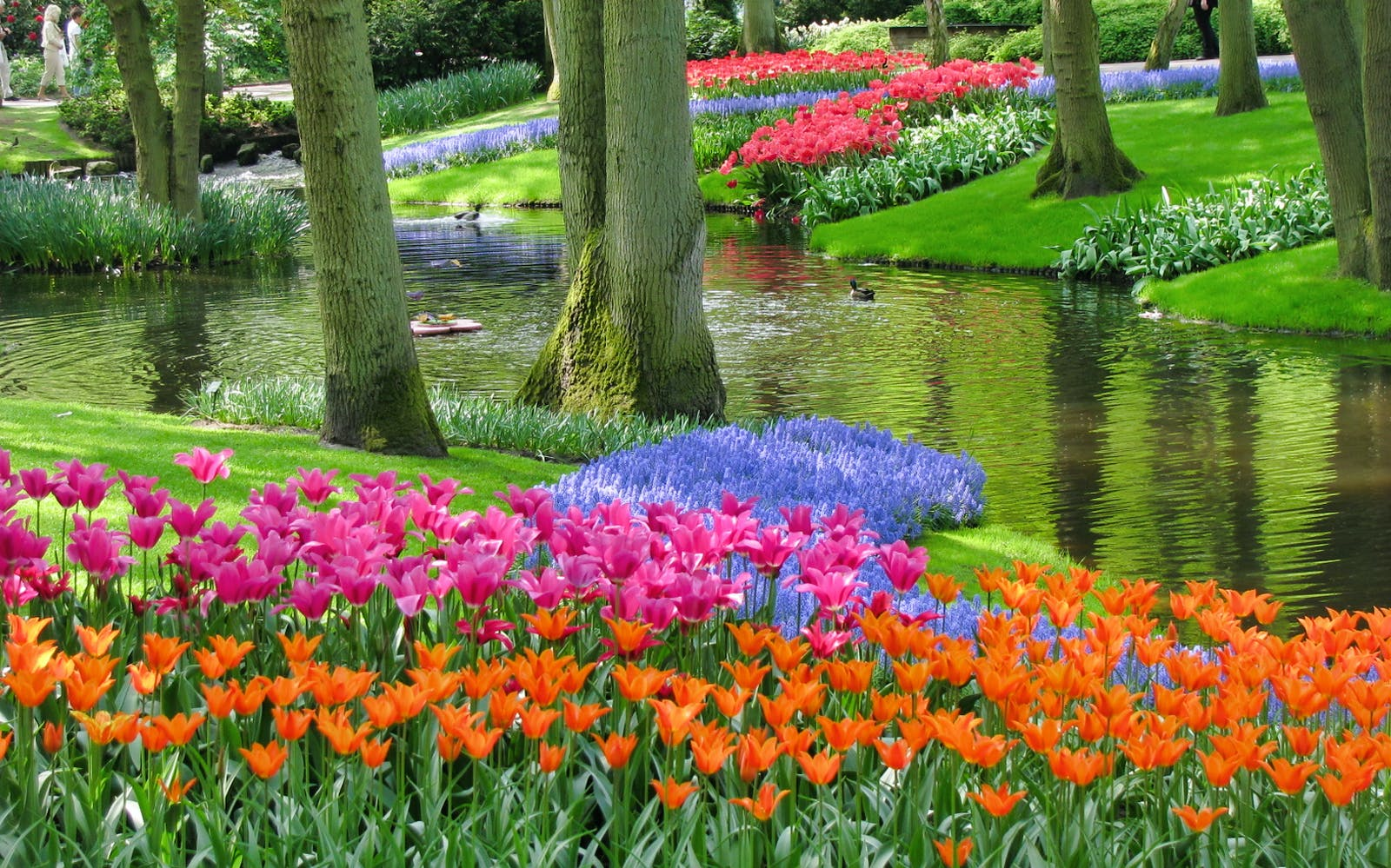 Keukenhof & Flowerfields Guided Tour with visit to Bulbfarm