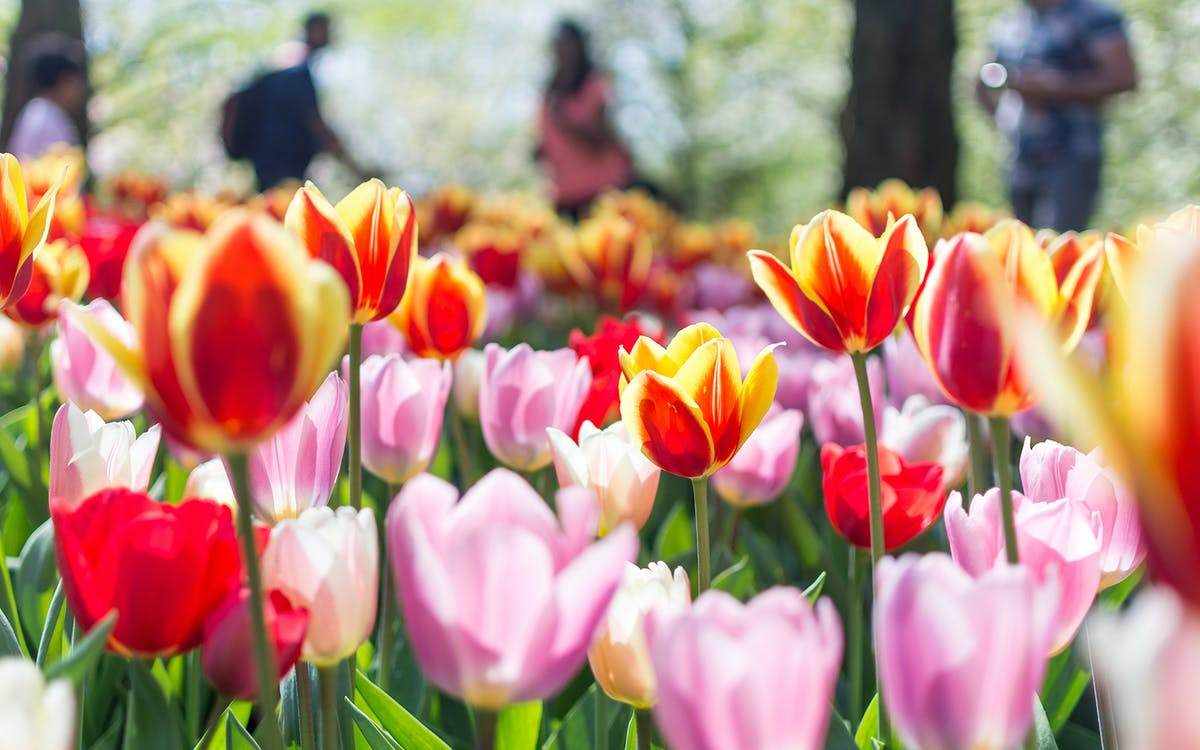 from amsterdam: keukenhof & flowerfields guided tour - multiple departures-1