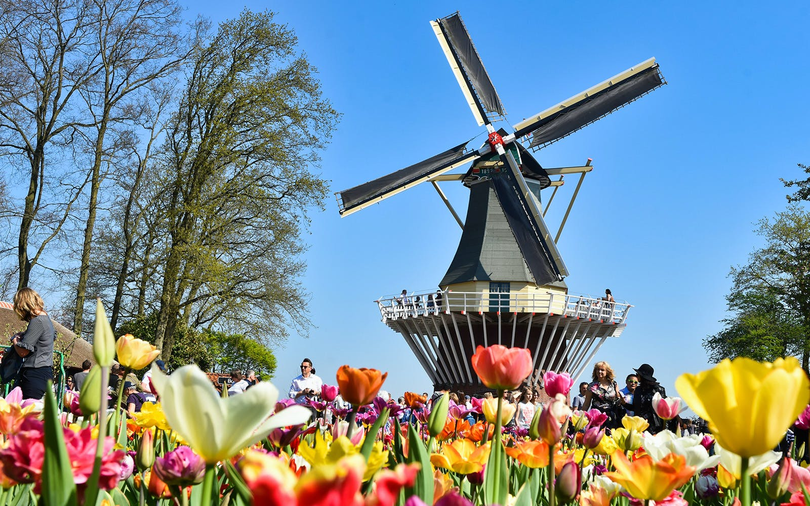 Keukenhof, Zaanse Schans & A'DAM Lookout Guided Tour