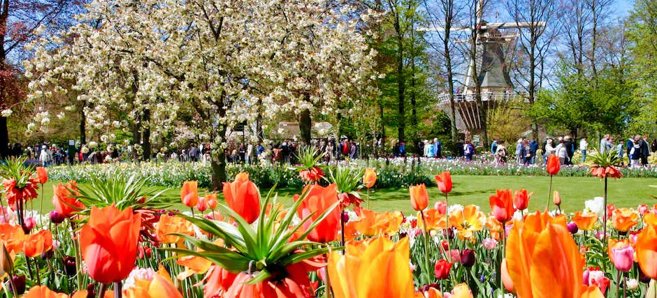 Keukenhof Fast Track Entry Ticket & Round Trip From Amsterdam