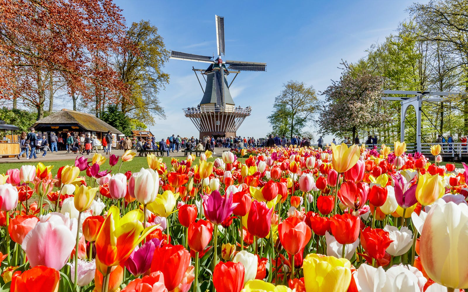 Keukenhof & Flowerfields Guided Tour From Amsterdam