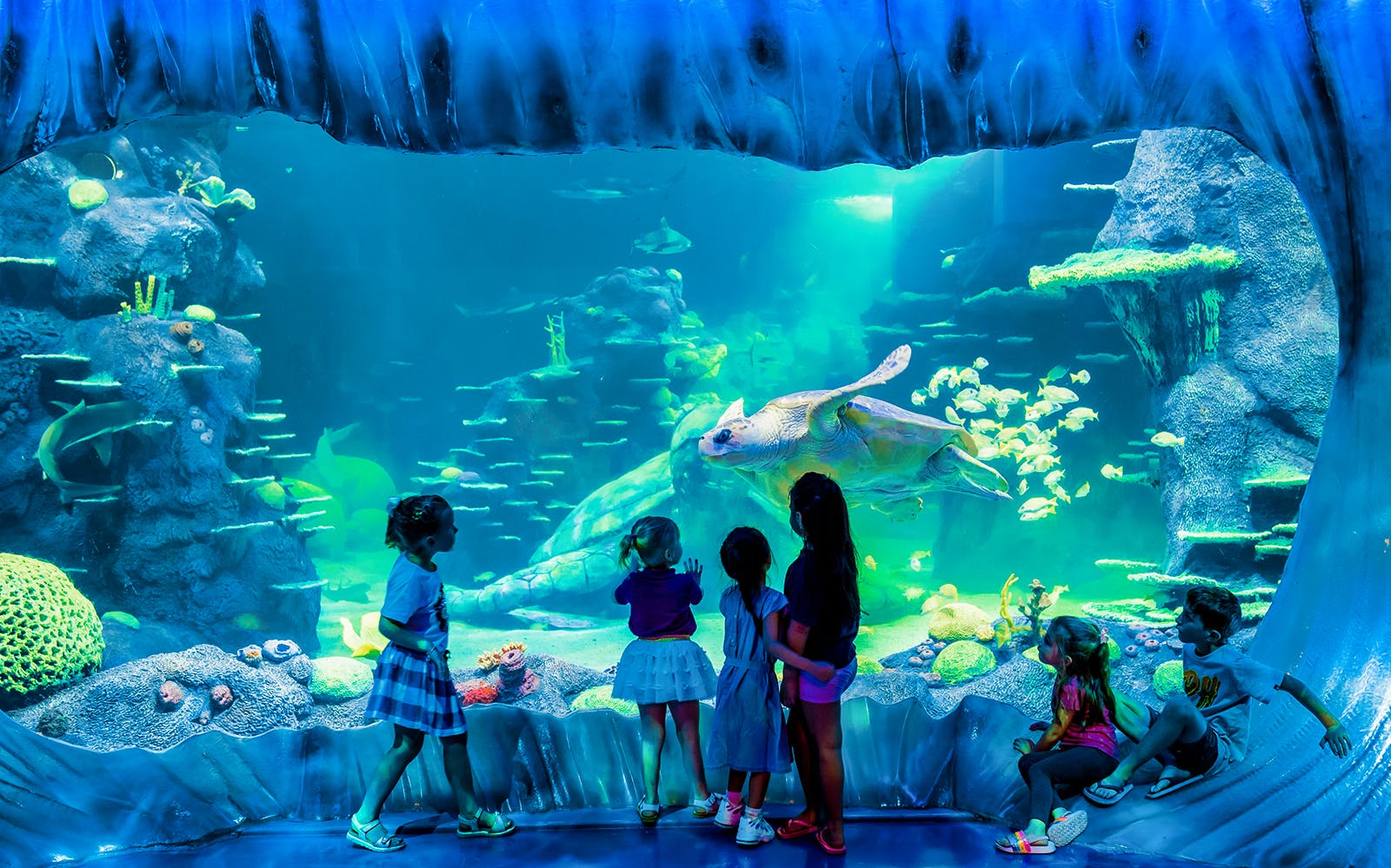 sea life sydney aquarium anytime entry ticket -3