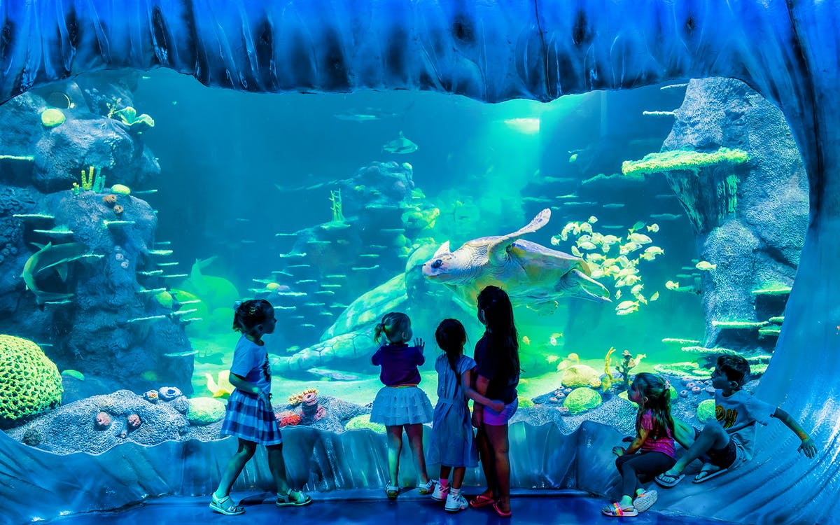 skip the line tickets to sea life sydney aquarium -3