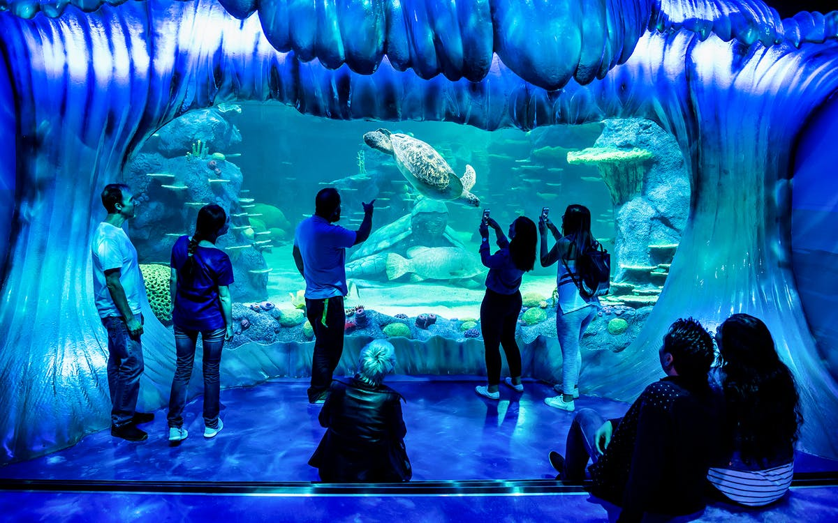 skip the line tickets to sea life sydney aquarium -8