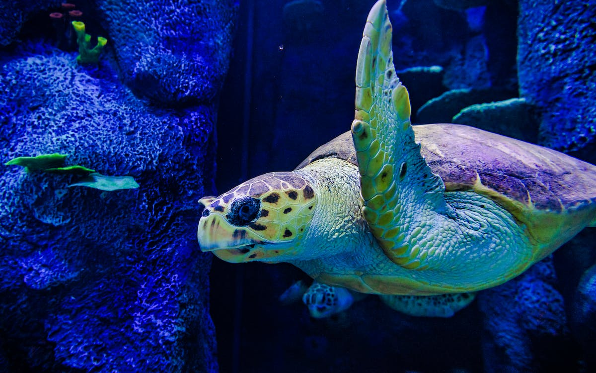 skip the line tickets to sea life sydney aquarium -6