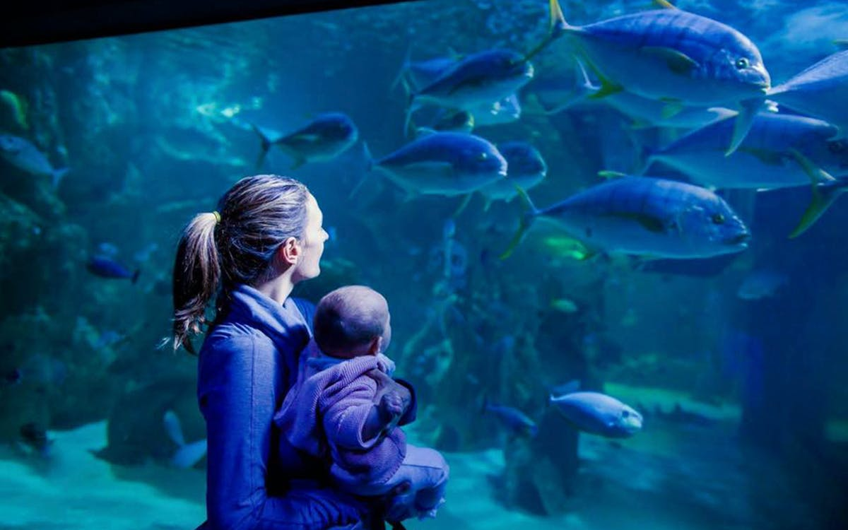 skip the line tickets to sea life sydney aquarium -2