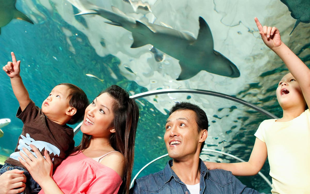 skip the line tickets to sea life sydney aquarium -1