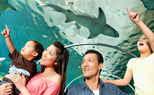 Skip the Line Tickets to SEA LIFE Sydney Aquarium