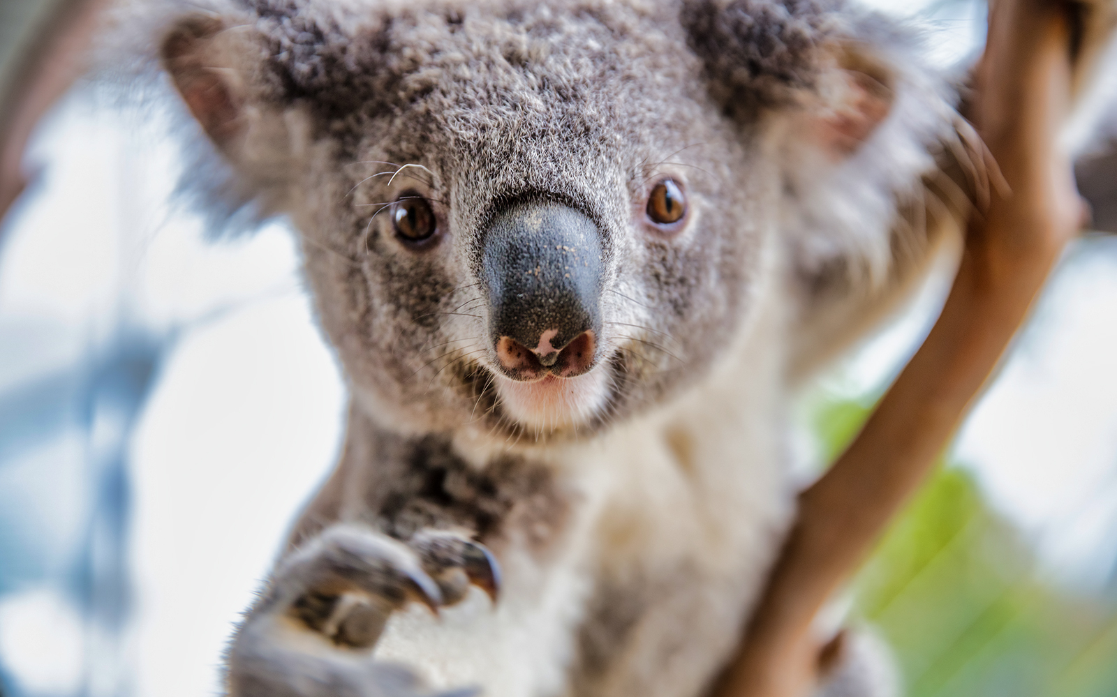 Your A-Z Guide To Featherdale Wildlife Park