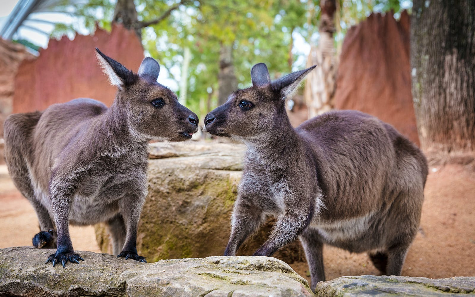 wild life sydney zoo anytime entry ticket -5
