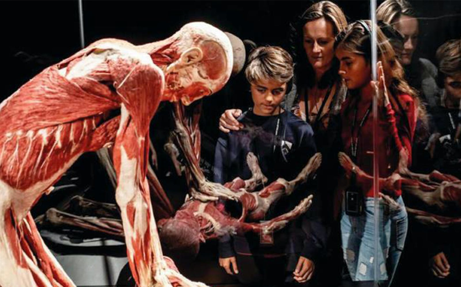 Body Worlds London- General Admission