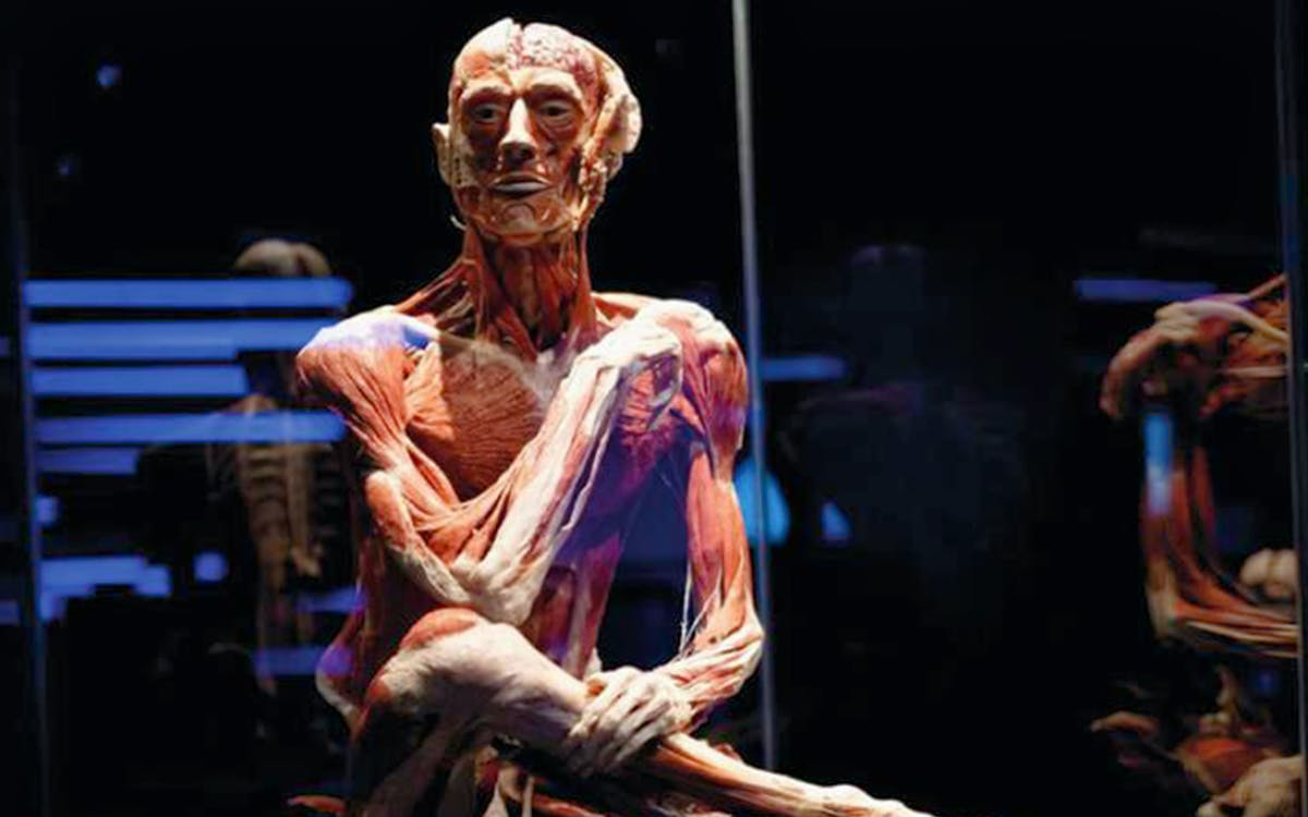 body worlds london-4