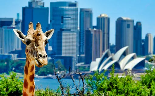 Taronga Zoo Entry Ticket