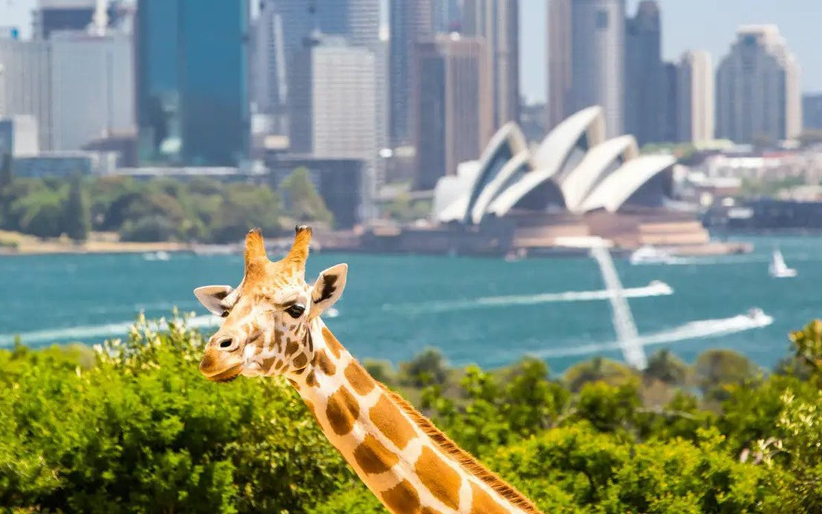 taronga zoo wild australia experience with cable car ride-2