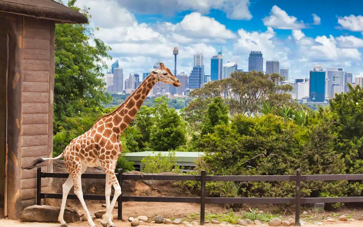 taronga zoo vip aussie gold tour with cable car ride-1