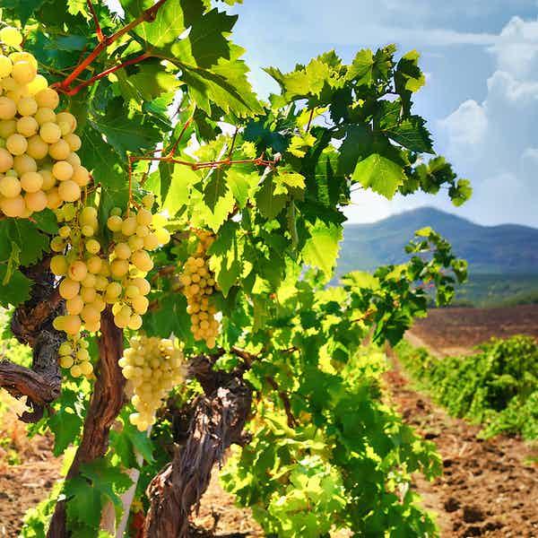 paris to loire valley - wine tasting