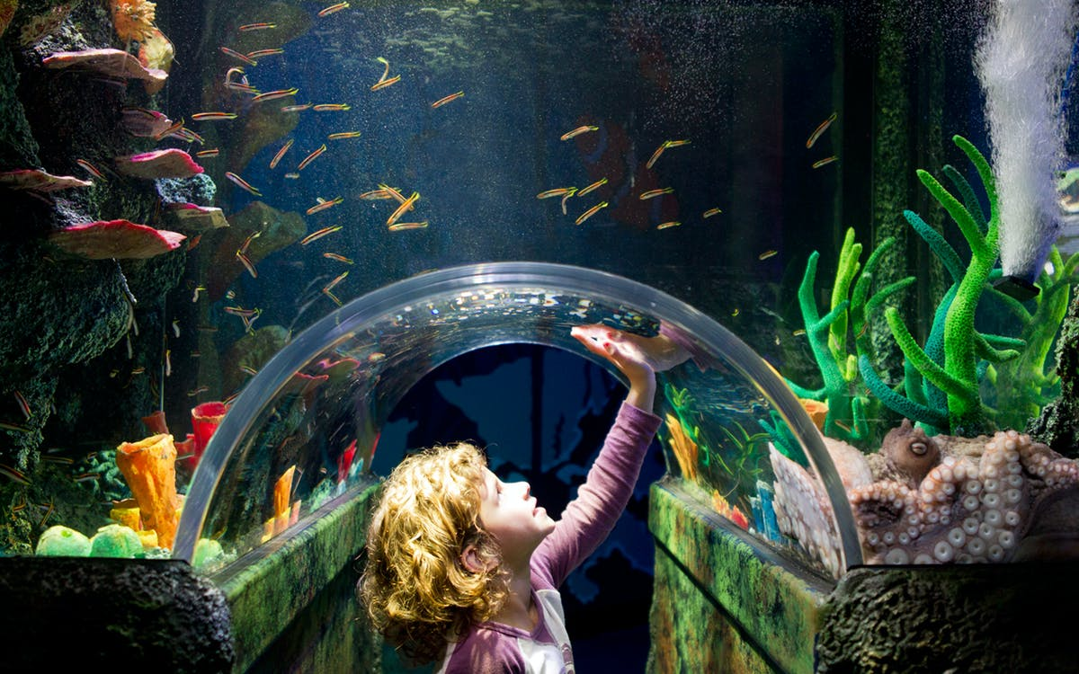 skip the line tickets to sea life melbourne-1