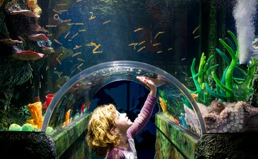 Skip the Line Tickets to SEA LIFE Melbourne