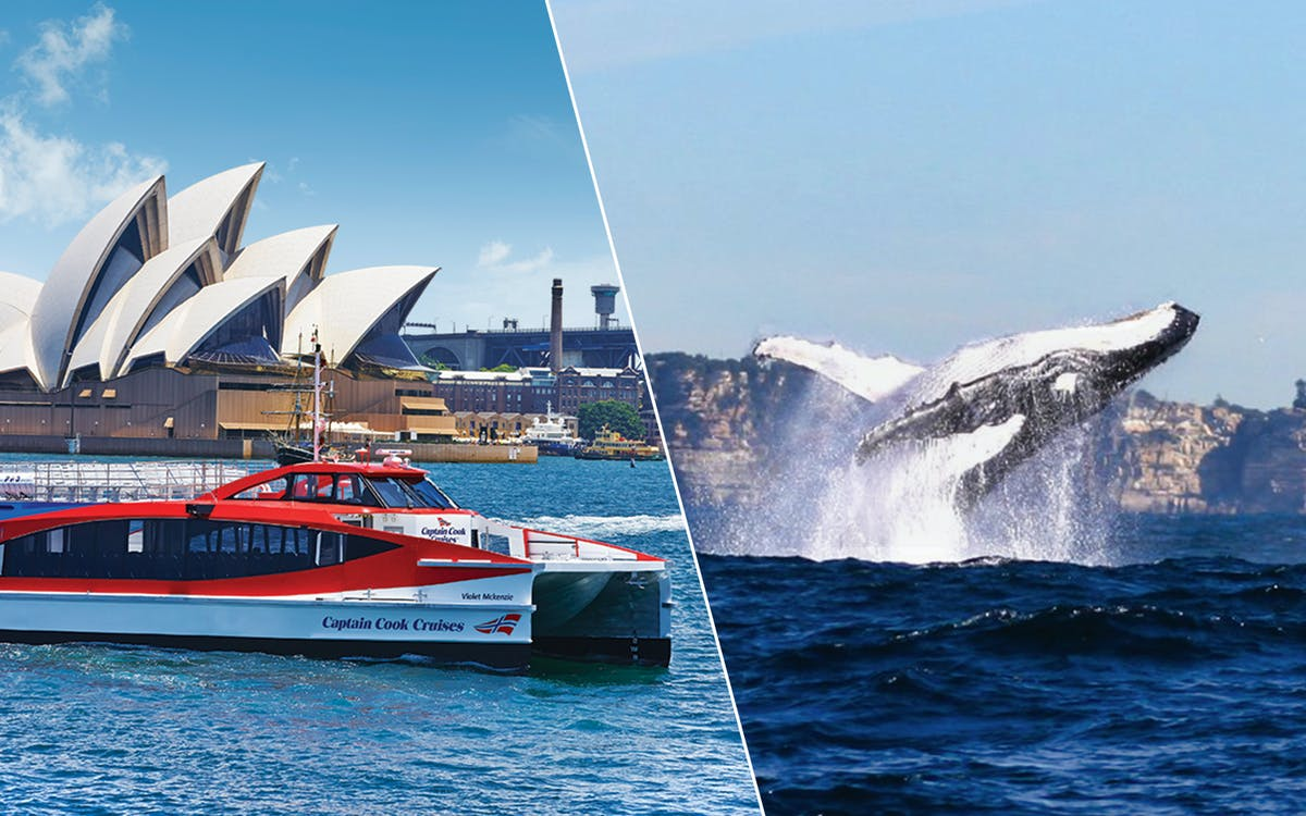 2-day hop on hop off harbour explorer & whale watching cruise combo-1