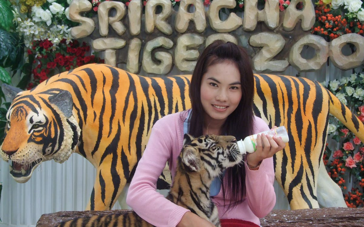 sriracha tiger zoo entry ticket in pattaya-1