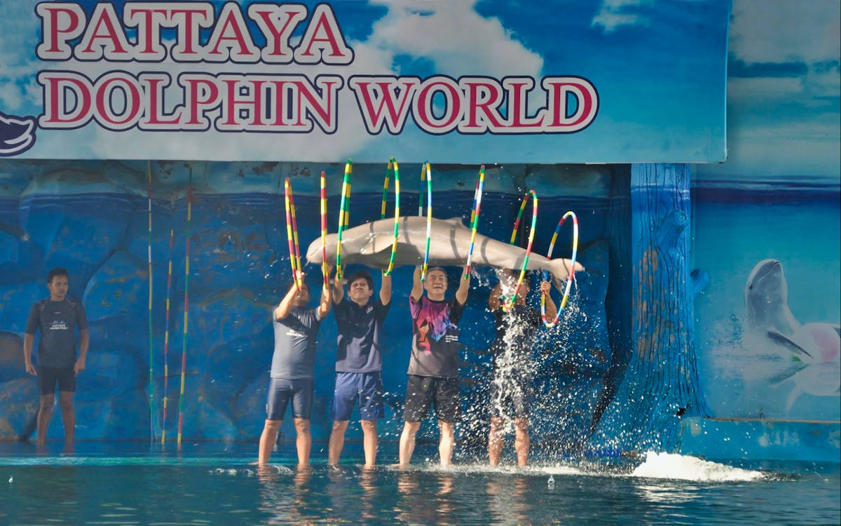 pattaya dolphin world ticket-1
