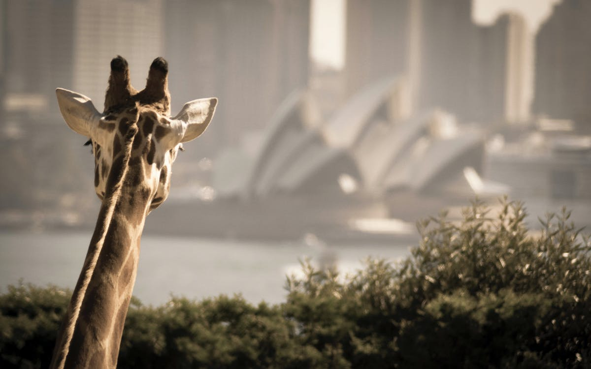 sydney zoo + 2 day harbour hop-on-hop-off cruise-1