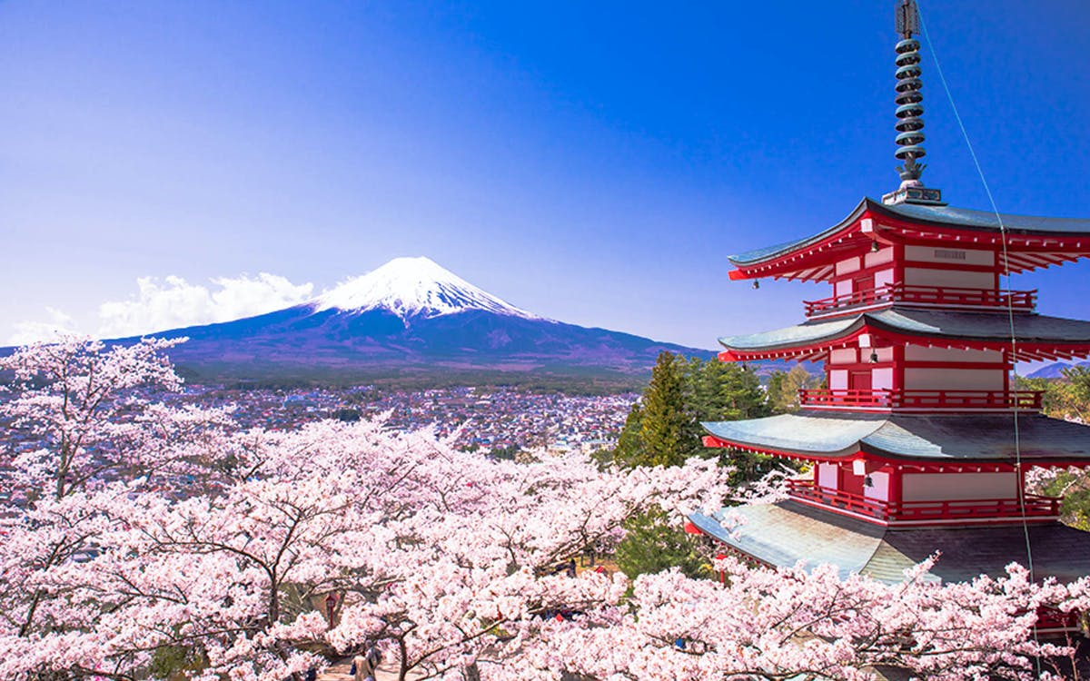 mt fuji best cherry blossom spots tour-1