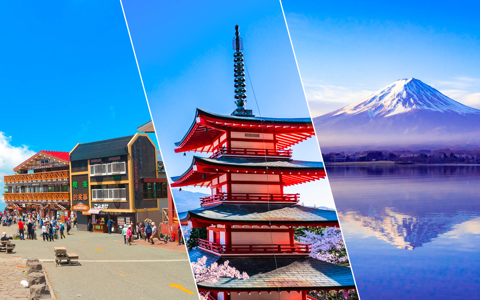 japan cherry blossom tours