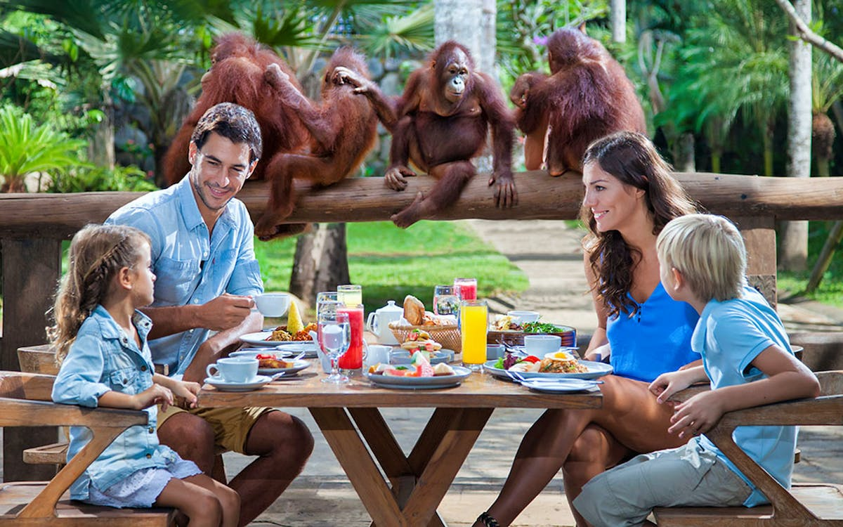 bali zoo combo: breakfast with orangutans & elephant expedition-1