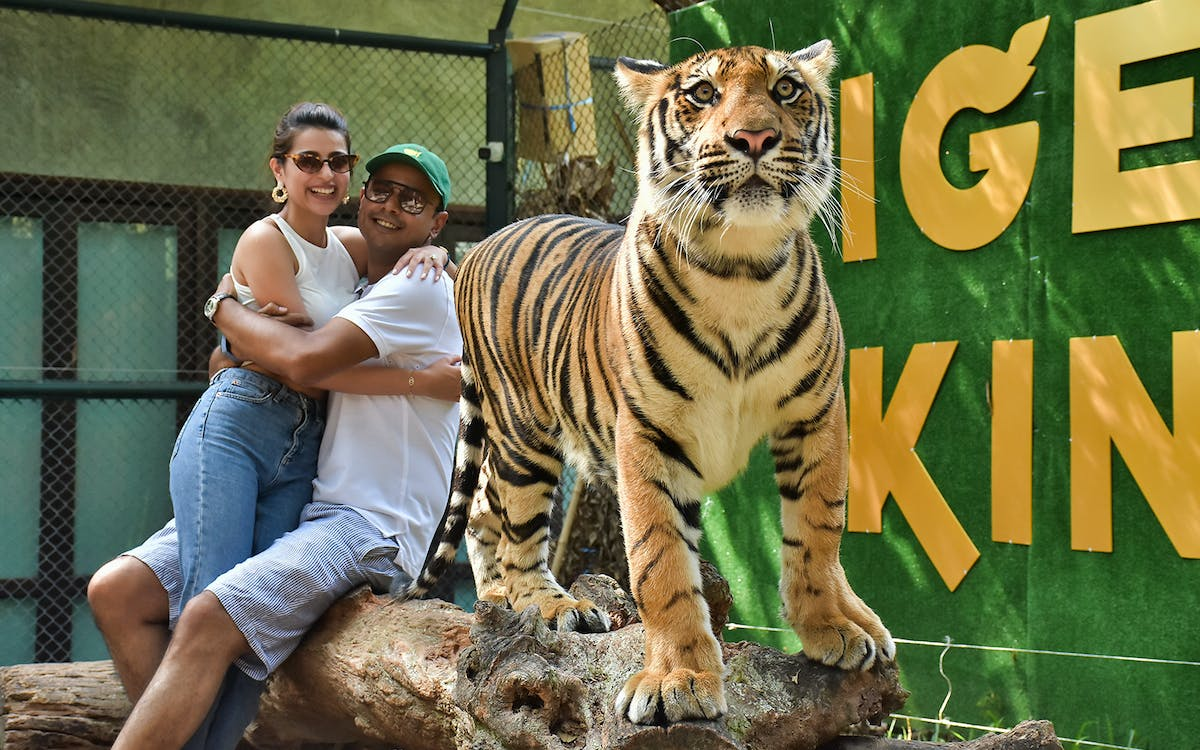 tiger kingdom ticket in phuket-1