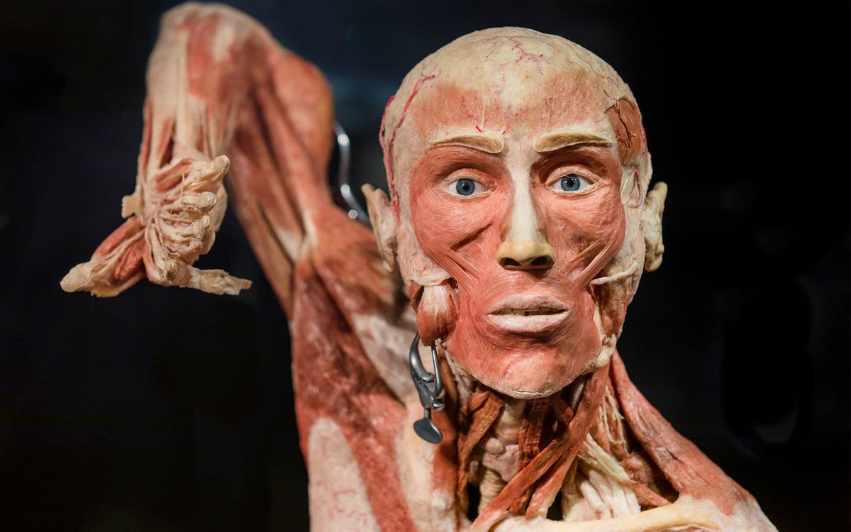 body worlds amsterdam - the happiness project tickets-1
