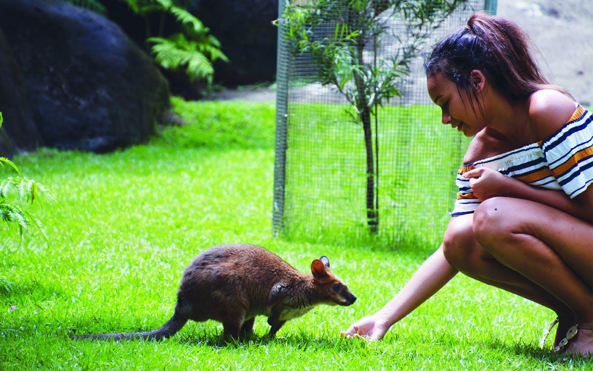 kuranda wildlife experience package - 3 in 1 combo-1
