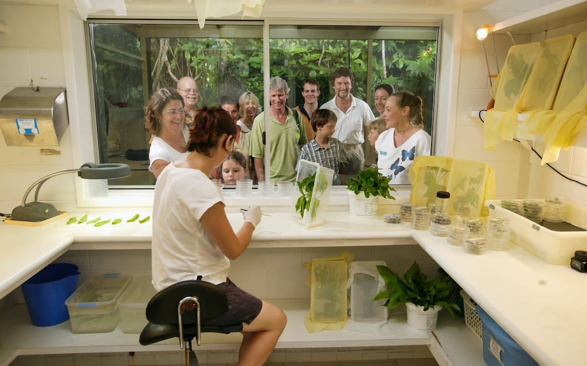 australian butterfly sanctuary entry with guided aviary tour-0