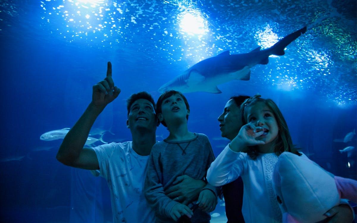 oceanogràfic & príncep felipe science museum : 2 day pass-0