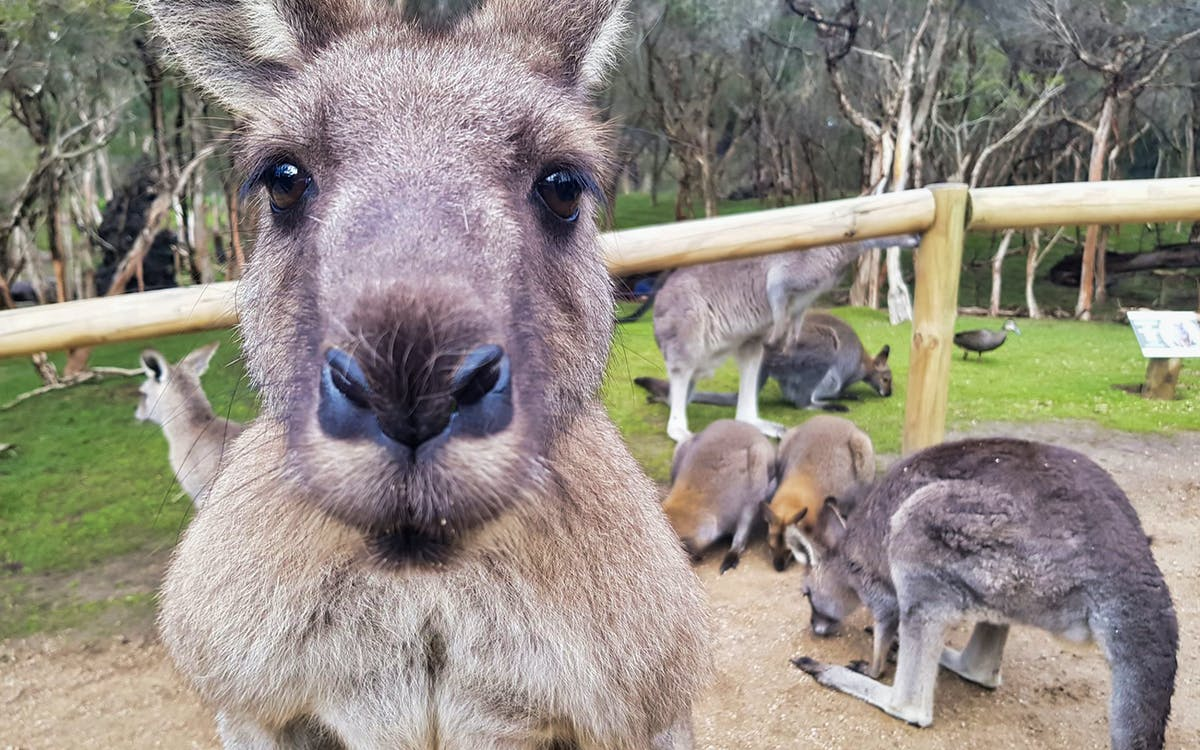 moonlit sanctuary wildlife park admission tickets-0